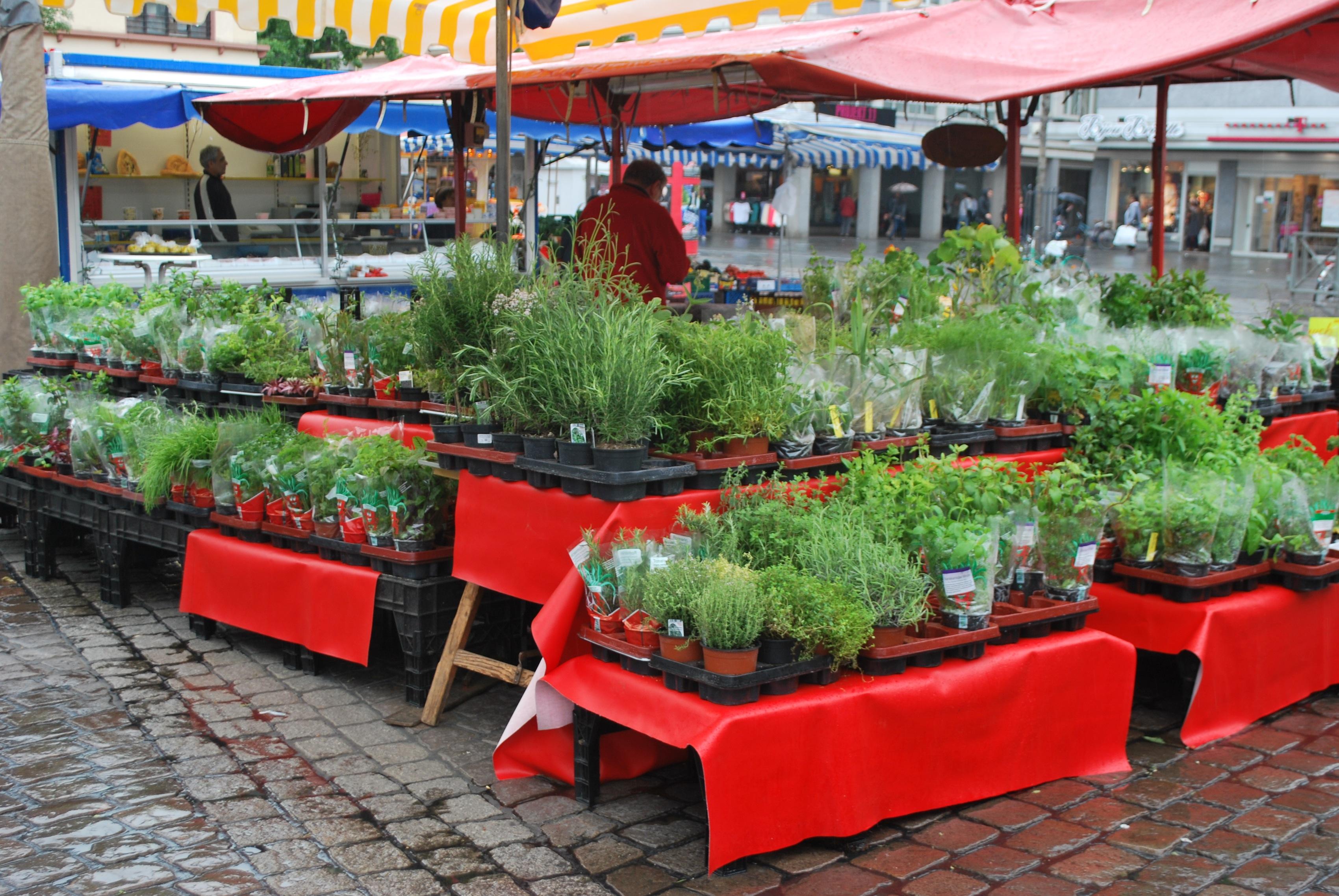 mannheim herbs farmers market