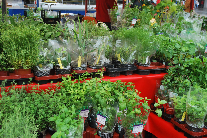 mannheim herb vendor farmers market