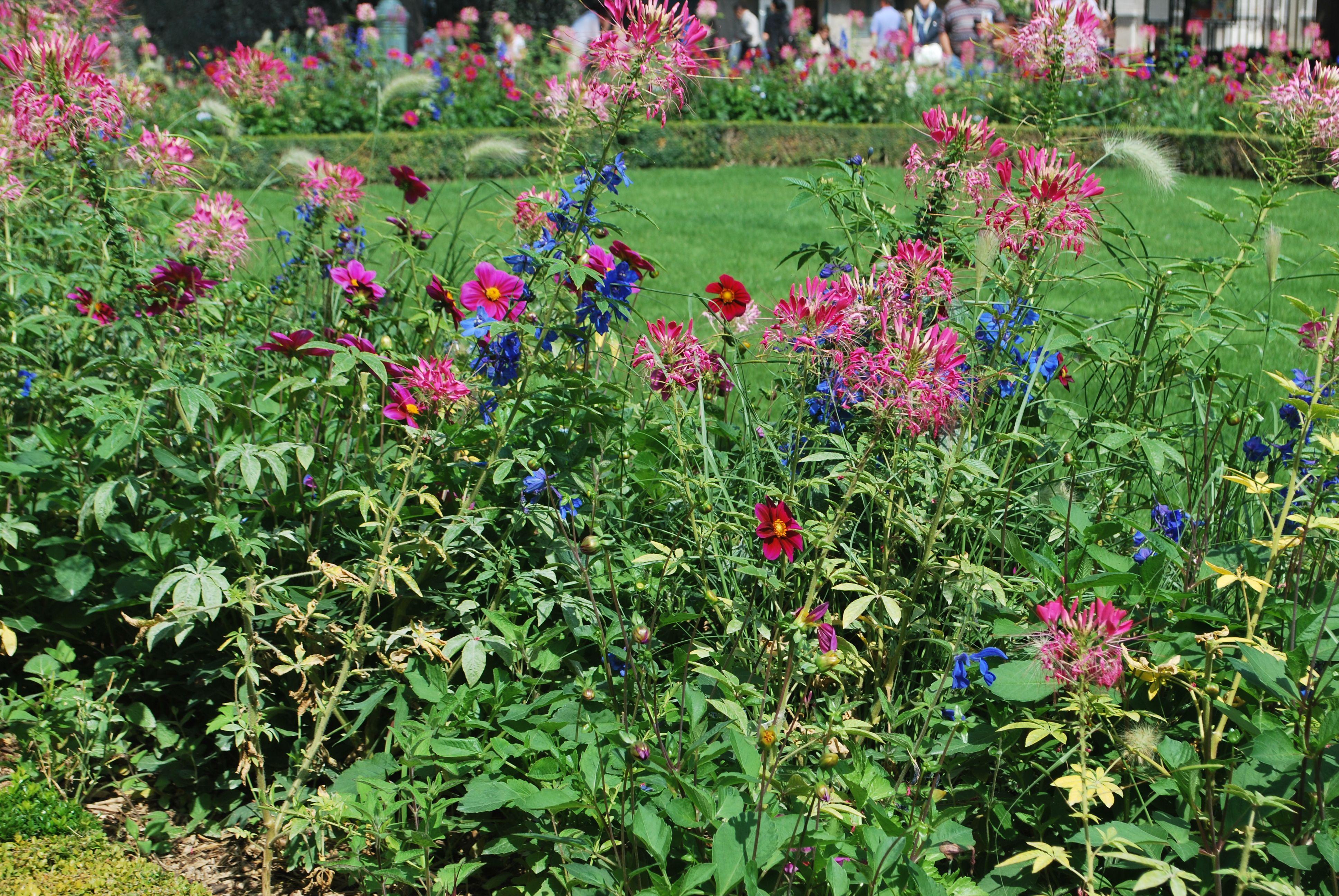 june-flowers-paris