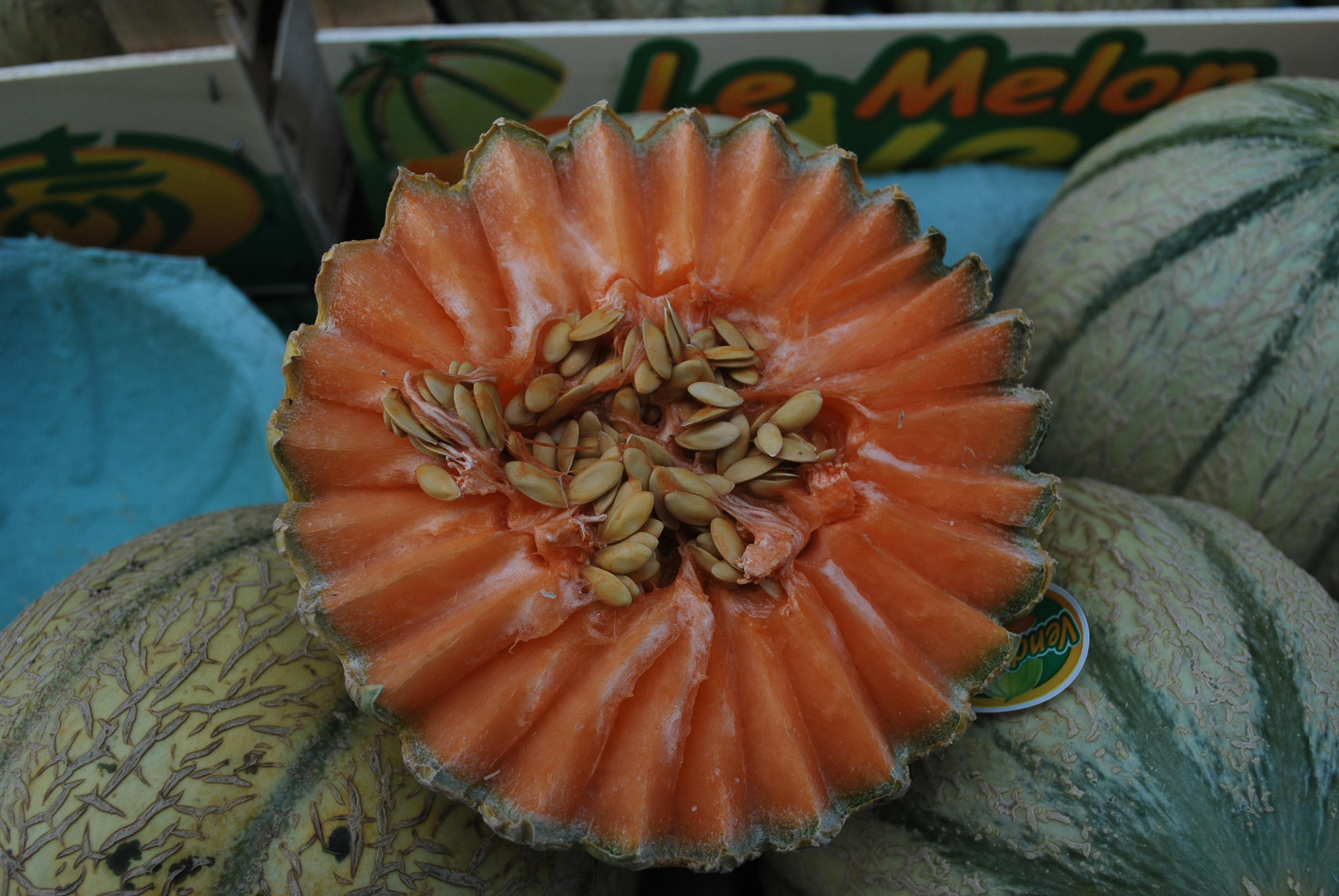 melon-food-art-paris