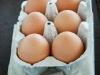 eggs2010-1-framed