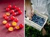 plumblueberrydiptych-001-cr
