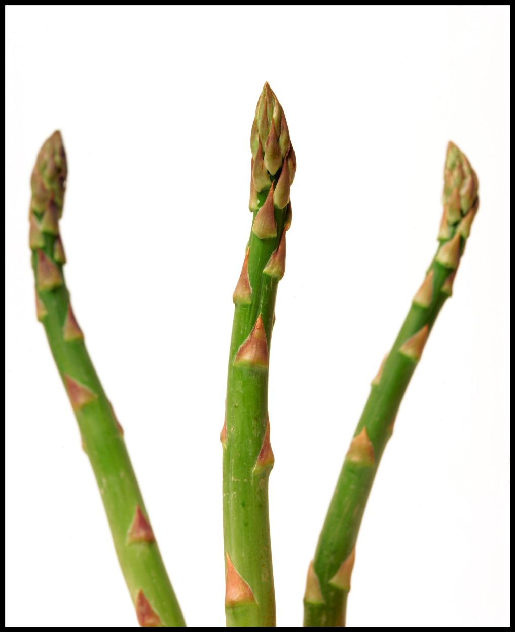 aspargus-photo-alison-harris