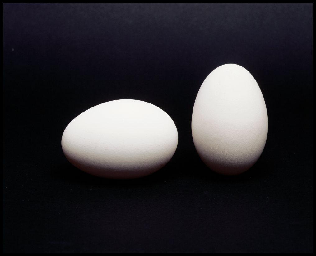 eggs-photo-alison-harris