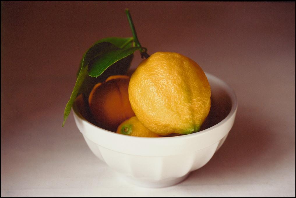 lemons-photo-alison-harris